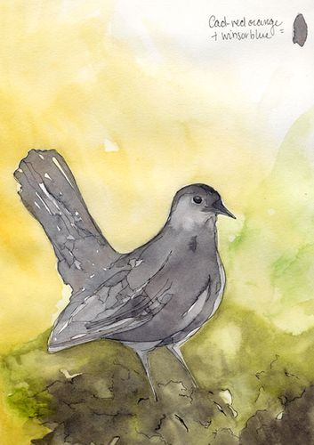 Greycatbird
